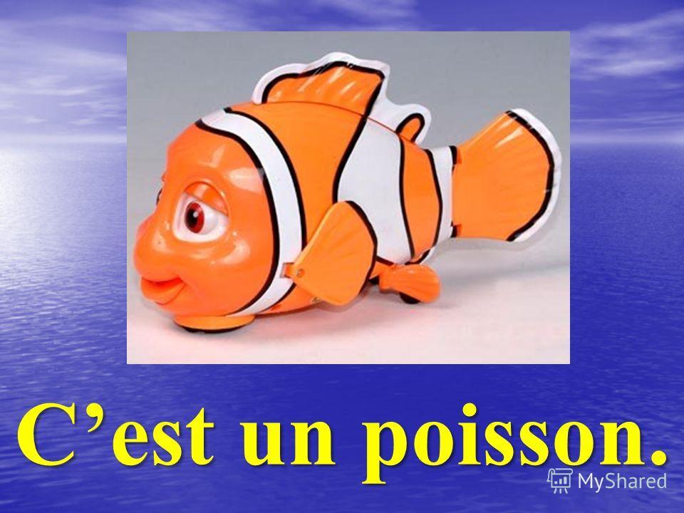 Cest un poisson.
