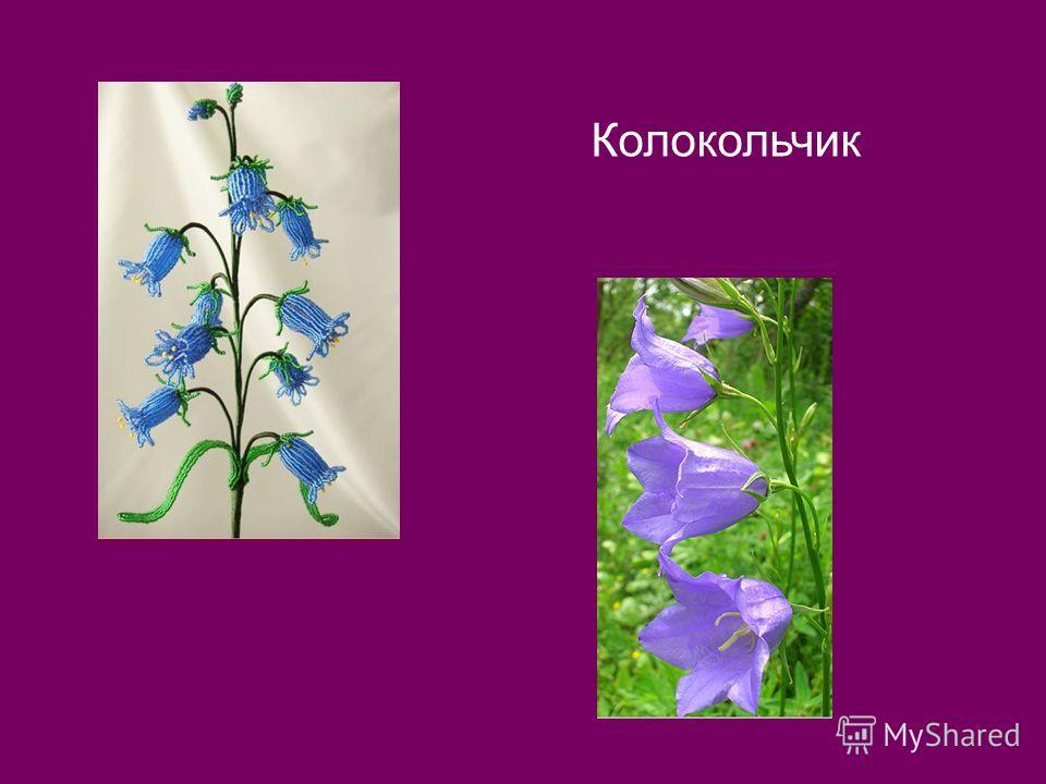 1. По горизонтали: Родился цветочек в один майский день, И луг золотистый им дорожит. Мне кажется только его ты задень, и он мелодично тебе зазвенит. И этот звук услышит луг. И птицы, и цветы. Давай послушаем: А, вдруг услышим я и ты.