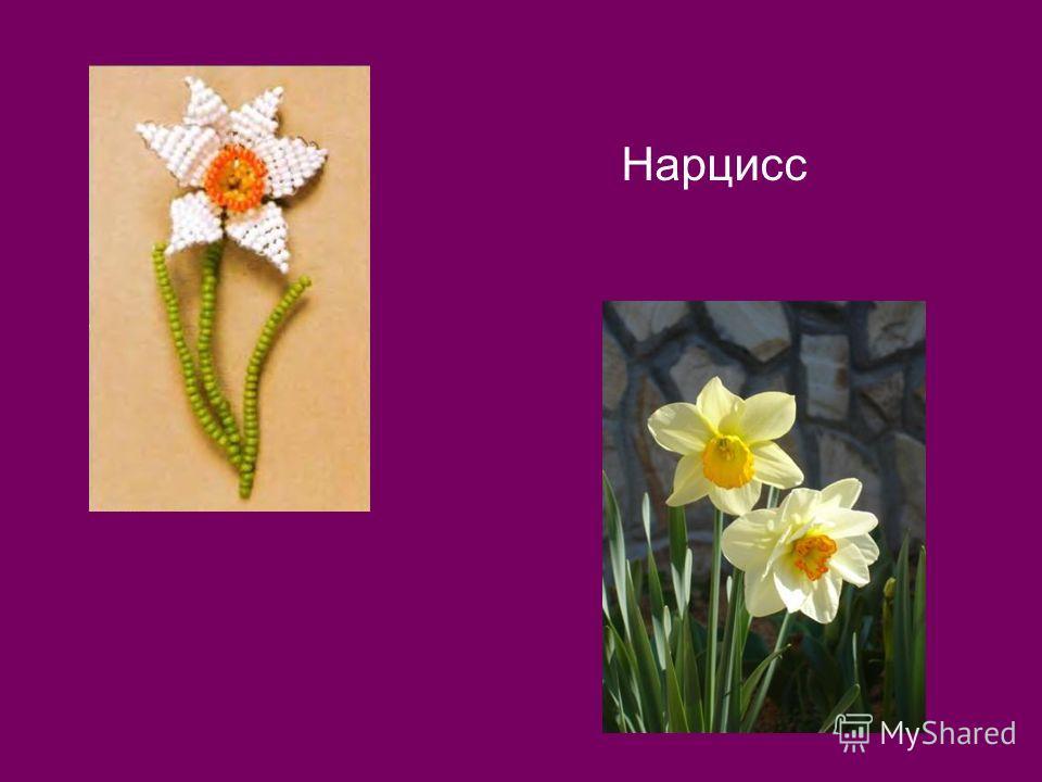 4. По горизонтали: Он – цветочный принц-поэт, В шляпу желтую одет. Про весну сонет на бис Прочитает нам …