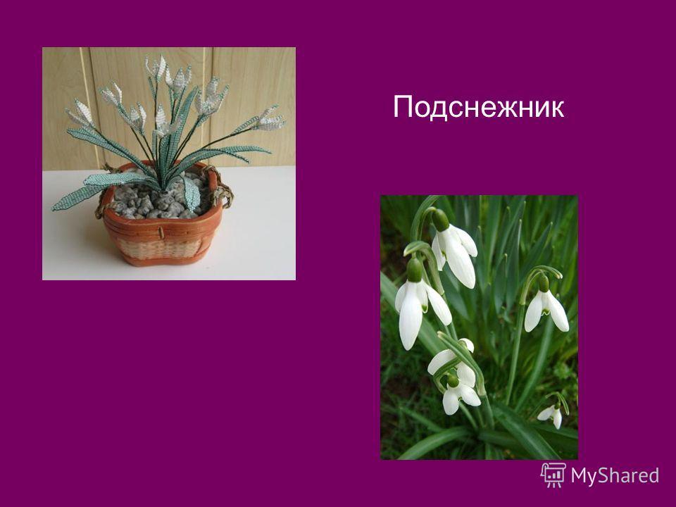 7. По вертикали: Пробивался сквозь снежок, Удивительный росток. Самый первый, самый нежный, Самый бархатный цветок!