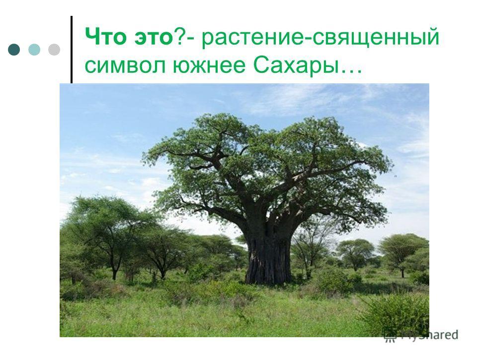 Что это?- растение-священный символ южнее Сахары…