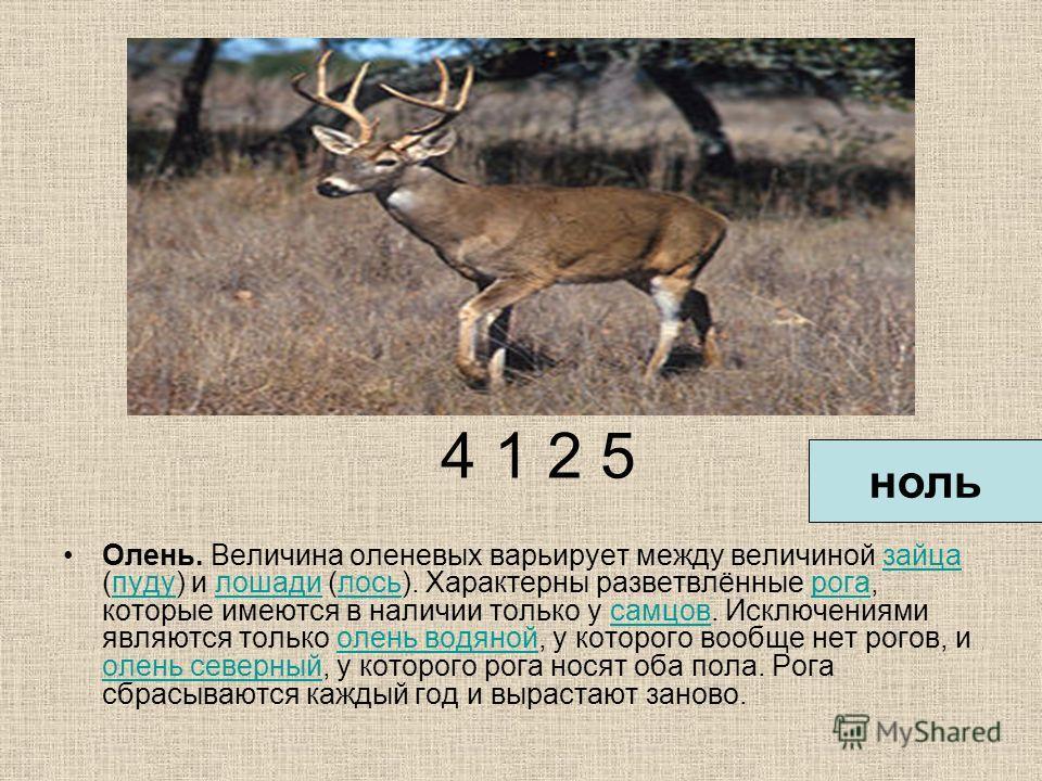 4 1 2 5 Олень. Величина оленевых варьирует между величиной зайца (пуду) и лошади (лось). Характерны разветвлённые рога, которые имеются в наличии только у самцов. Исключениями являются только олень водяной, у которого вообще нет рогов, и олень северн