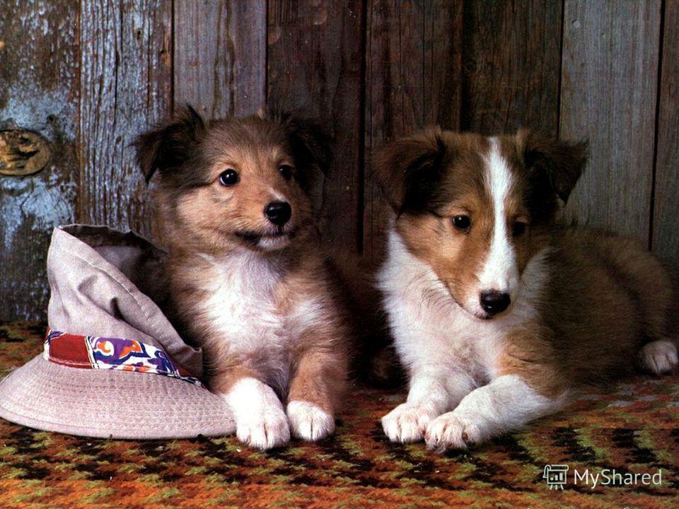 Вычислите. Зашифрованное слово – порода немецкой охотничьей собаки. 28 + 36; 72 + 28 ; 54 - 31; 32 + 26; 63 + 20; 43 + 17; 75 – 24; 35 + 18; 17 + 18; 35 + 13. 23 48 100 83 53 64 60 100 35 31 58