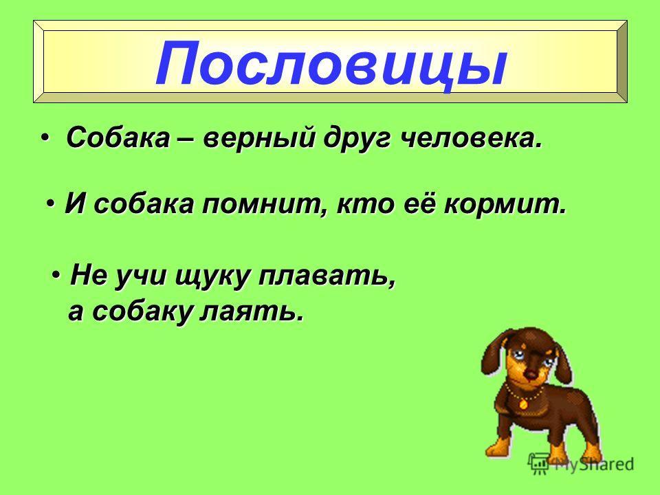 Как кошка с собакойКак кошка с собакой живут живут Вот где собака Вот где собака зарыта! зарыта! О постоянно ссорящихся людях. Вот в чём суть дела заключается. Фразеологизмы