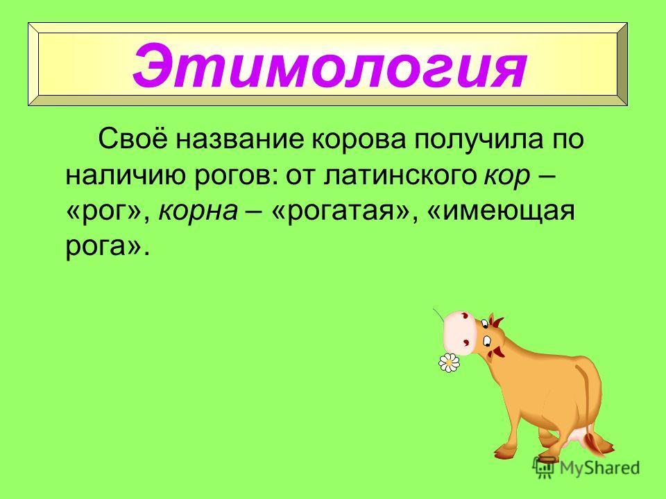 Корова Крупное рогатое домашнее животное, дающее молоко.