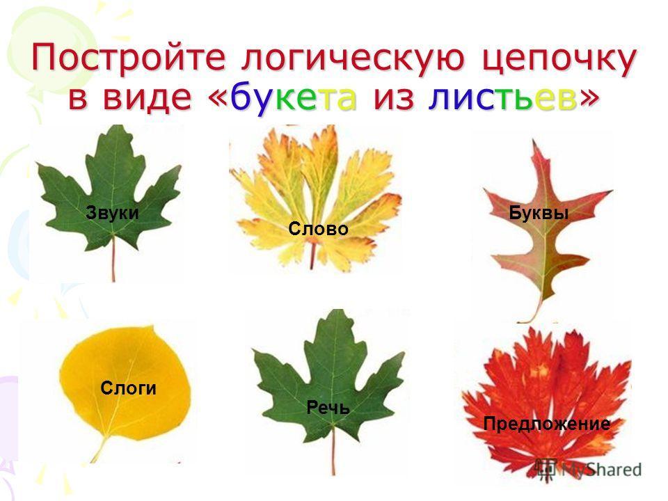 Постройте логическую цепочку в виде «букета из листьев» Слово Слоги Предложение Звуки Буквы Речь