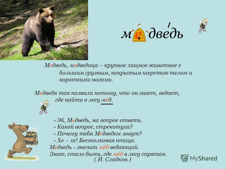 м дведь Медведь, медведица – крупное хищное животное с большим грузным, покрытым шерстью телом и короткими ногами. Медведя так назвали потому, что он знает, ведает, где найти в лесу мёд. - Эй, Медведь, на вопрос ответь. - Какой вопрос, стрекотуха? -