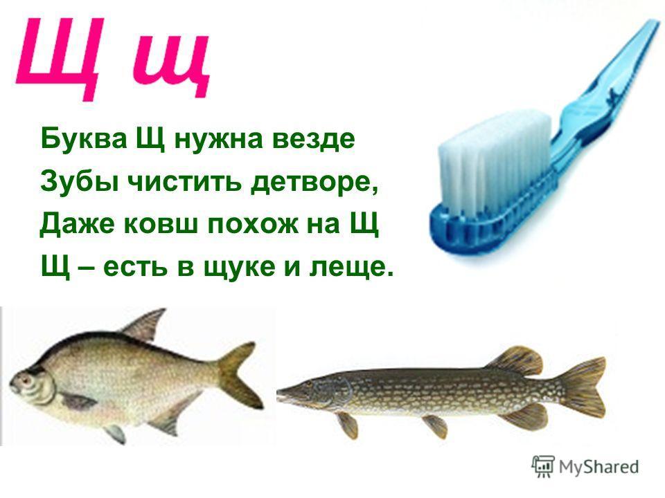 Буква Щ нужна везде Зубы чистить детворе, Даже ковш похож на Щ Щ – есть в щуке и леще.