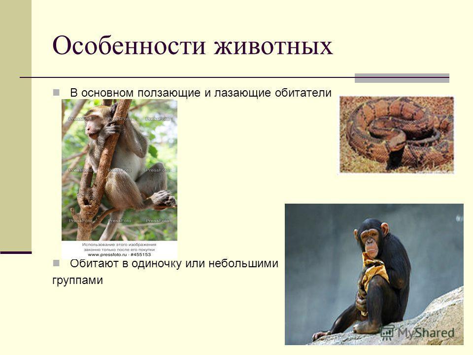 Особенности животных В основном ползающие и лазающие обитатели Обитают в одиночку или небольшими группами