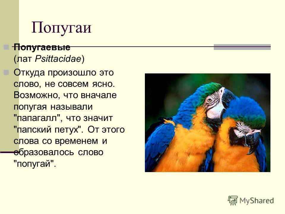 Попугаи Попугаевые (лат Psittacidae) Откуда произошло это слово, не совсем ясно. Возможно, что вначале попугая называли папагалл, что значит папский петух. От этого слова со временем и образовалось слово попугай.