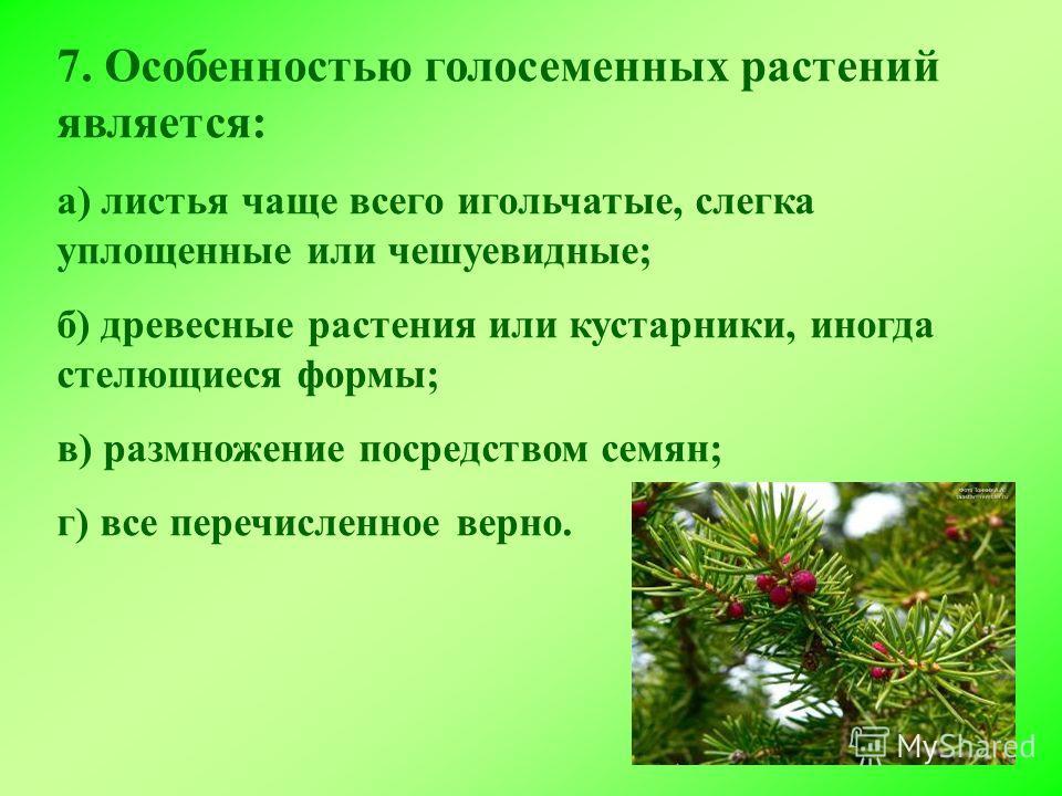 7. Особенностью голосеменных растений является: а) листья чаще всего игольчатые, слегка уплощенные или чешуевидные; б) древесные растения или кустарники, иногда стелющиеся формы; в) размножение посредством семян; г) все перечисленное верно.