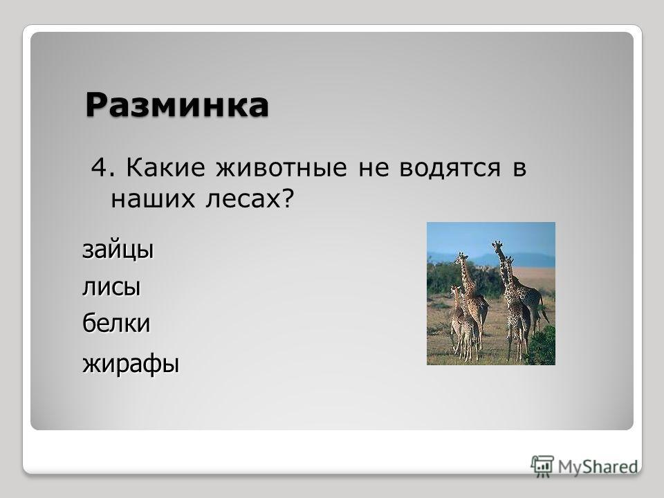 Разминка 4. Какие животные не водятся в наших лесах? зайцылисыбелки жирафы