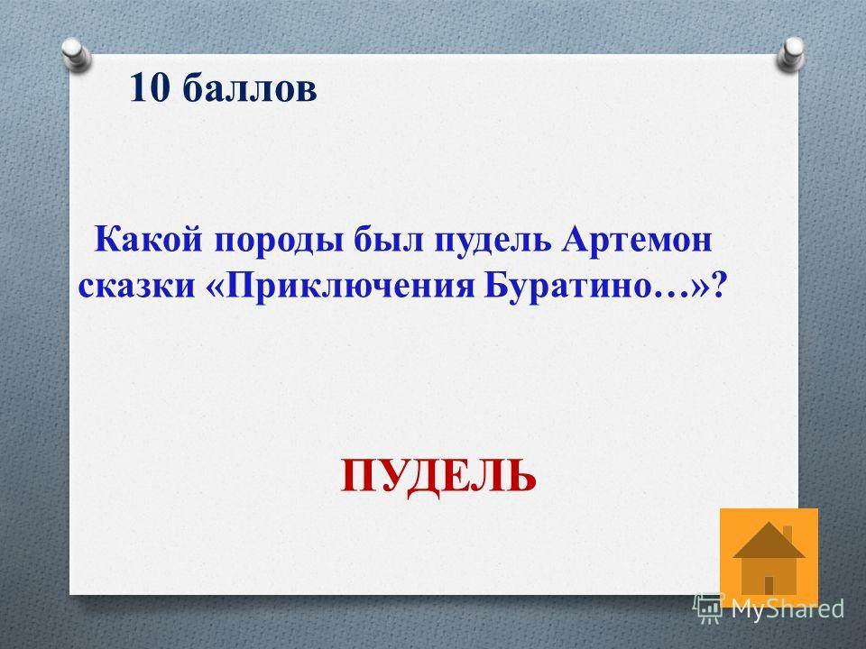 10 баллов Какой породы был пудель Артемон сказки «Приключения Буратино…»? ПУДЕЛЬ