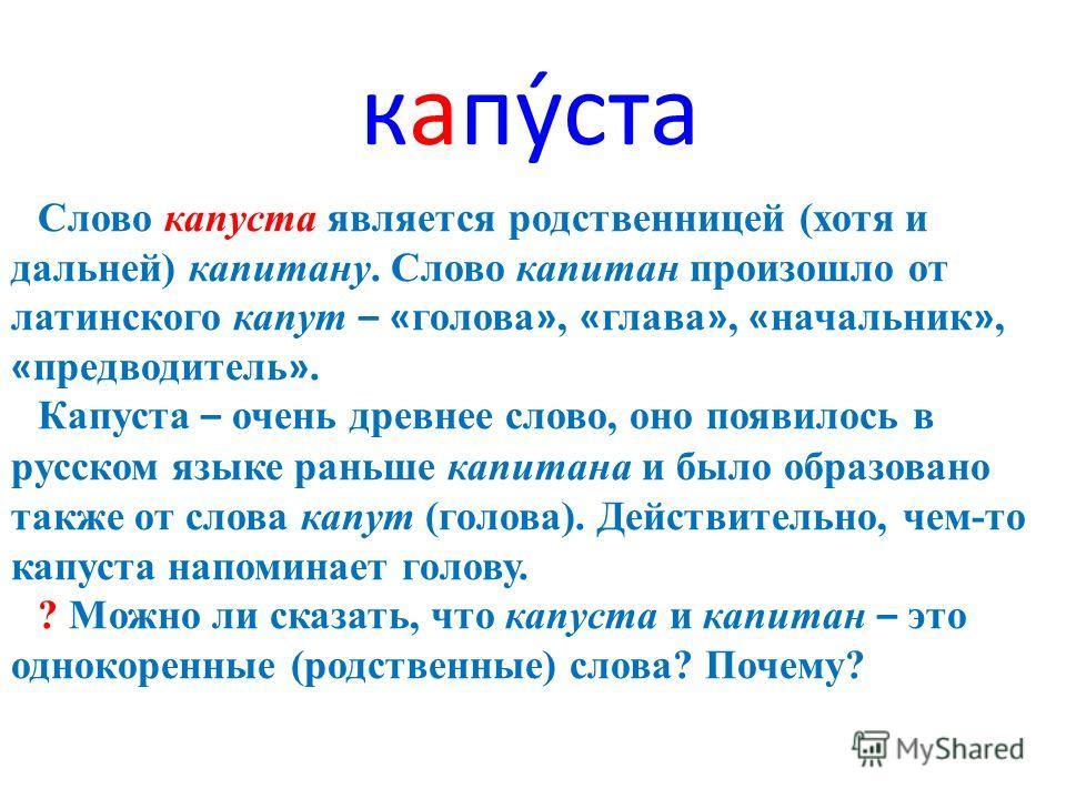 капуста Слово капуста является родственницей (хотя и дальней) капитану. Слово капитан произошло от латинского капут – « голова », « глава », « начальник », « предводитель ». Капуста – очень древнее слово, оно появилось в русском языке раньше капитана