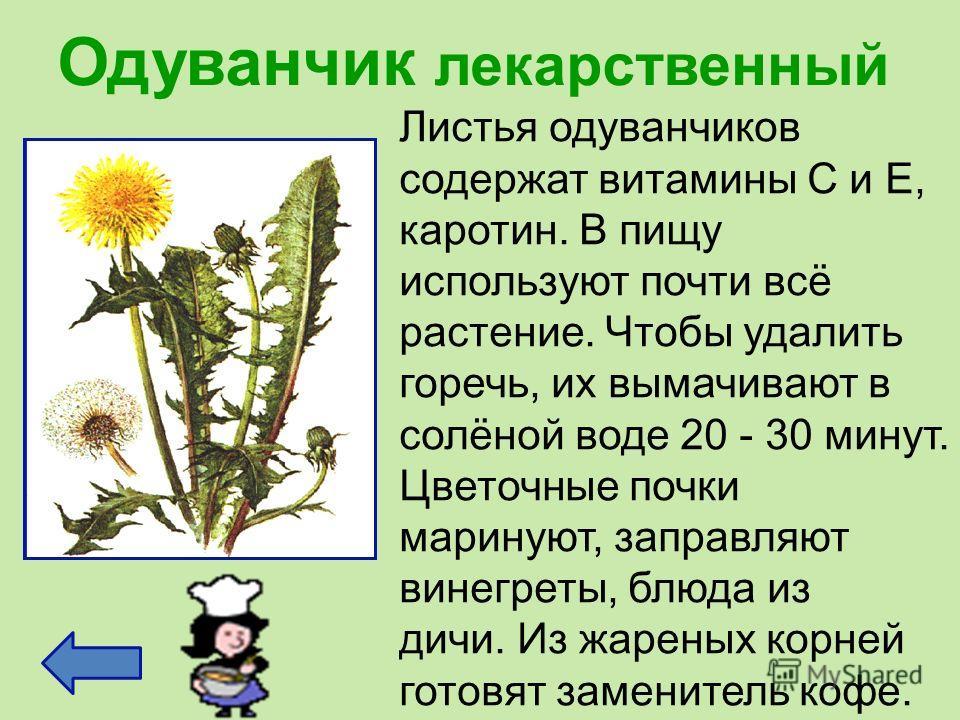 Одуванчик лекарственный Листья одуванчиков содержат витамины С и Е, каротин. В пищу используют почти всё растение. Чтобы удалить горечь, их вымачивают в солёной воде 20 - 30 минут. Цветочные почки маринуют, заправляют винегреты, блюда из дичи. Из жар