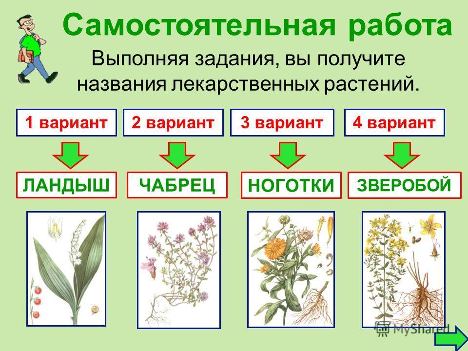Самостоятельная работа Выполняя задания, вы получите названия лекарственных растений. 1 вариант2 вариант3 вариант4 вариант ЧАБРЕЦ ЗВЕРОБОЙ ЛАНДЫШ НОГОТКИ
