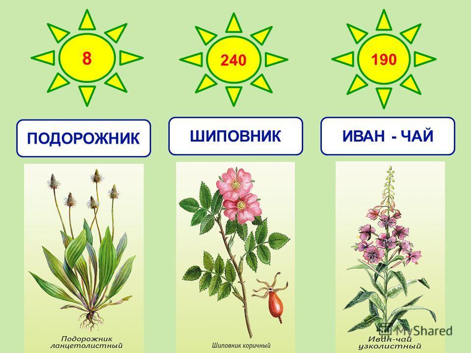 8 240 190 ПОДОРОЖНИКШИПОВНИКИВАН - ЧАЙ