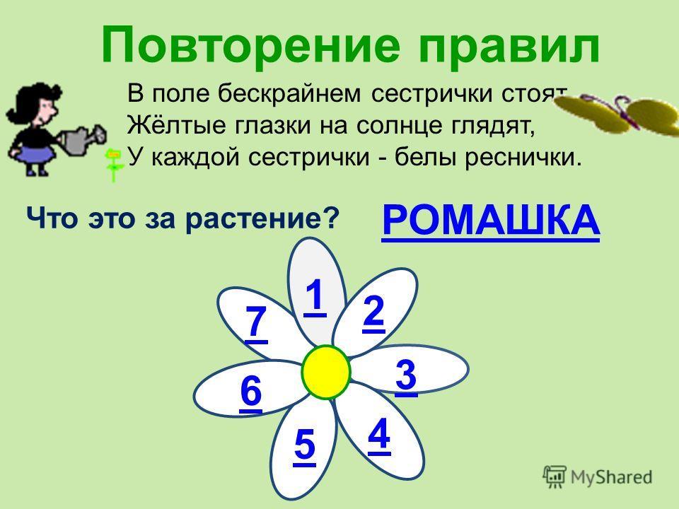 Повторение правил В поле бескрайнем сестрички стоят, Жёлтые глазки на солнце глядят, У каждой сестрички - белы реснички. Что это за растение? РОМАШКА 1 2 3 4 5 6 7
