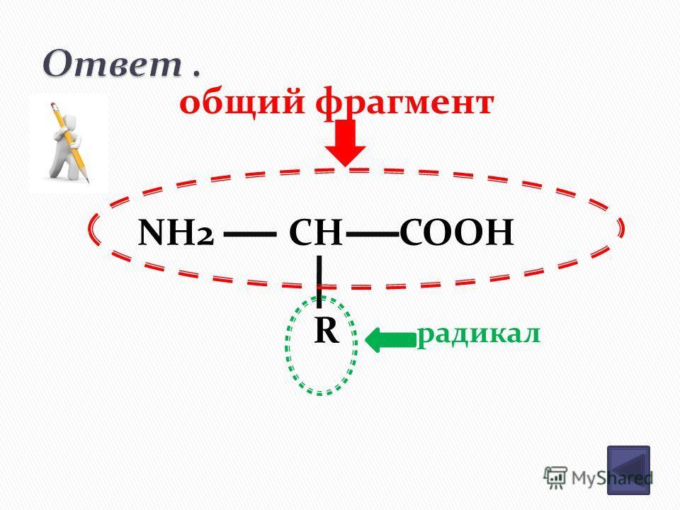 NH2 CH COOH R общий фрагмент радикал
