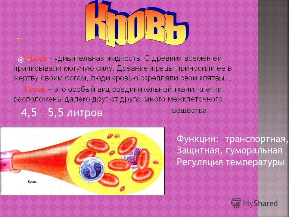 - 4,5 – 5,5 литров Функции: транспортная, Защитная, гуморальная Регуляция температуры