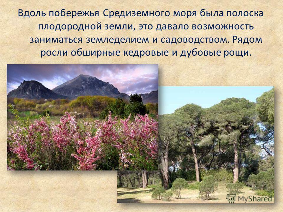 Вдоль побережья Средиземного моря была полоска плодородной земли, это давало возможность заниматься земледелием и садоводством. Рядом росли обширные кедровые и дубовые рощи.