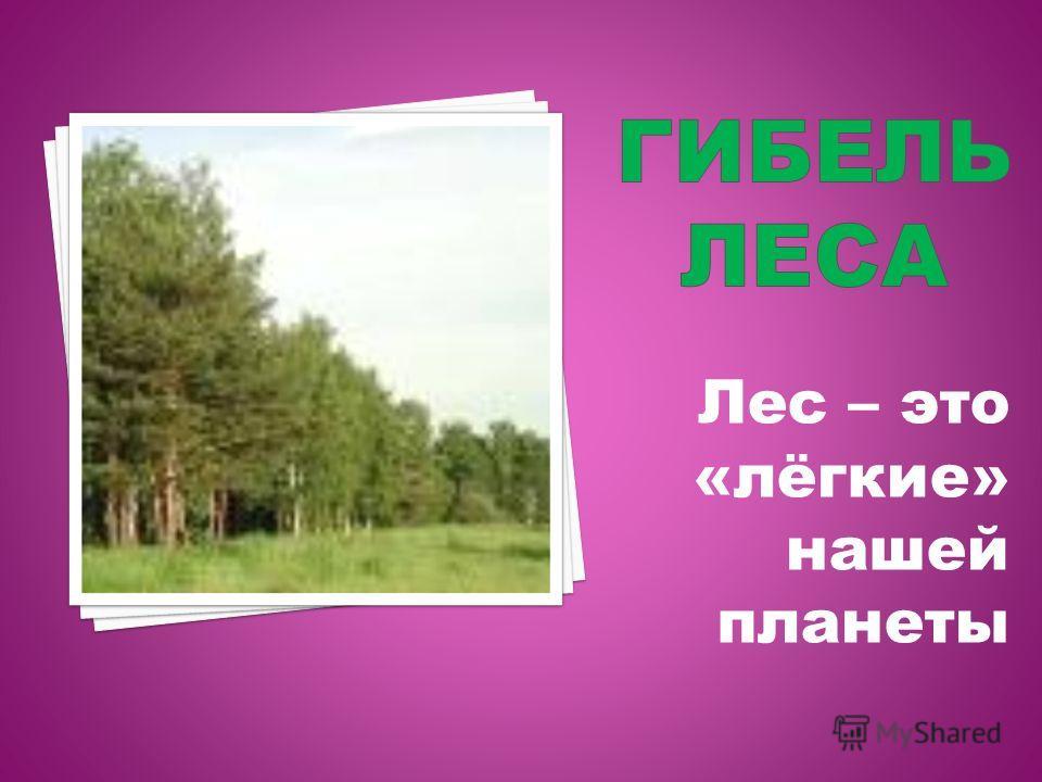 Лес – это «лёгкие» нашей планеты