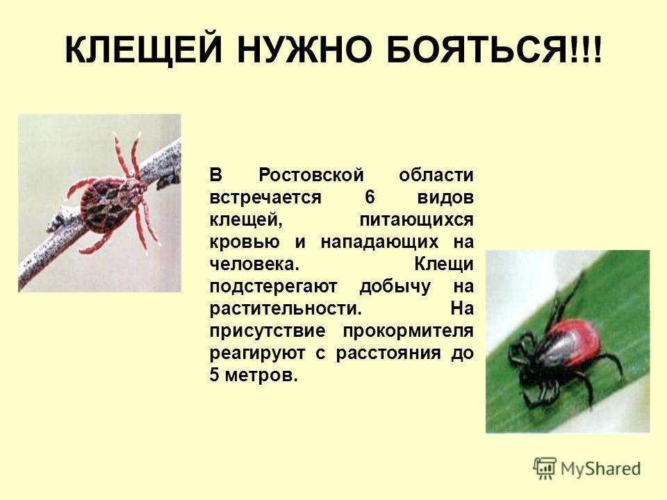 КЛЕЩЕЙ НУЖНО БОЯТЬСЯ!!! В Ростовской области встречается 6 видов клещей, питающихся кровью и нападающих на человека. Клещи подстерегают добычу на растительности. На присутствие прокормителя реагируют с расстояния до 5 метров.