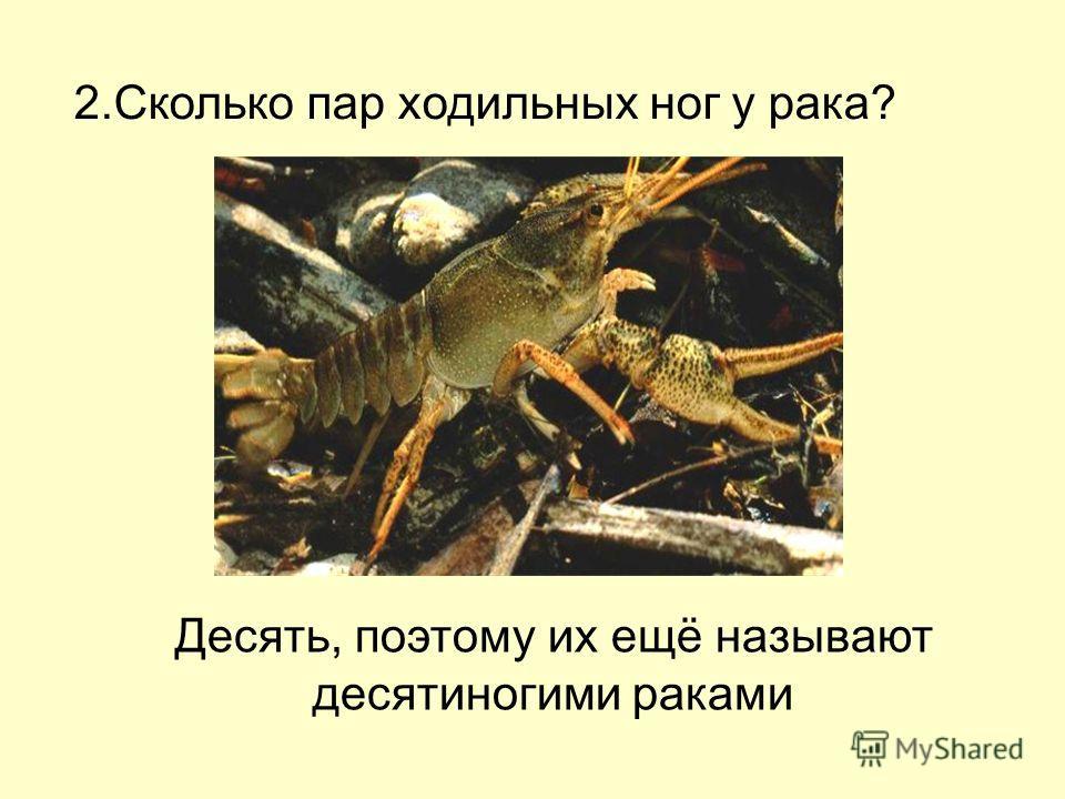 Вскоре на сегментах тела появляются зачатки конечностей: наземные формы, очень близкие к современным скорпионам, появились уже в каменноугольном периоде около миллионов лет назад.