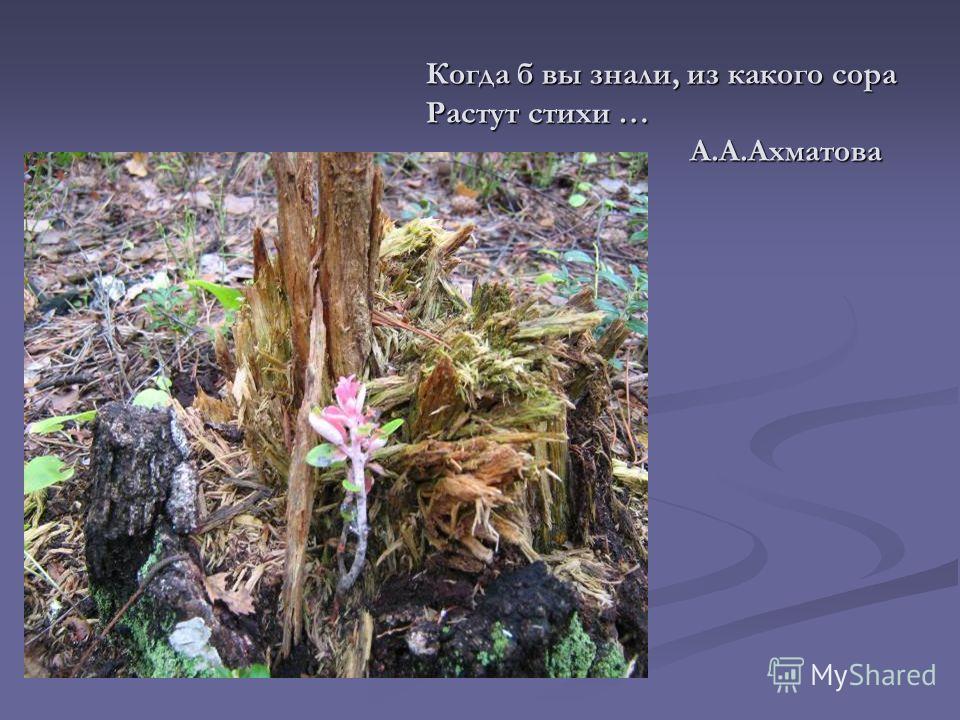 Когда б вы знали, из какого сора Растут стихи … А.А.Ахматова