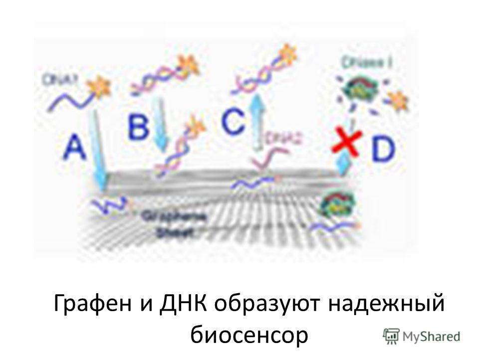 Графен и ДНК образуют надежный биосенсор