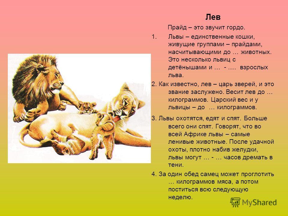 Лев Прайд – это звучит гордо. 1.Львы – единственные кошки, живущие группами – прайдами, насчитывающими до … животных. Это несколько львиц с детёнышами и … - …. взрослых льва. 2. Как известно, лев – царь зверей, и это звание заслужено. Весит лев до …