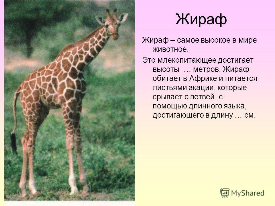 Жираф Жираф – самое высокое в мире животное. Это млекопитающее достигает высоты … метров. Жираф обитает в Африке и питается листьями акации, которые срывает с ветвей с помощью длинного языка, достигающего в длину … см.