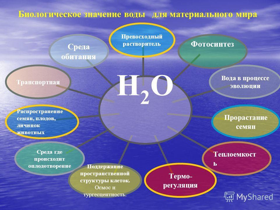 Н2О Превосходный растворитель ФотосинтезВода в процессе эволюции Прорастание семянТеплоемкость Термо- регуляция Поддержание пространственной структуры клеток. Осмос и тургесцентность. Среда где происходит оплодотворение Распространение семян, плодов,