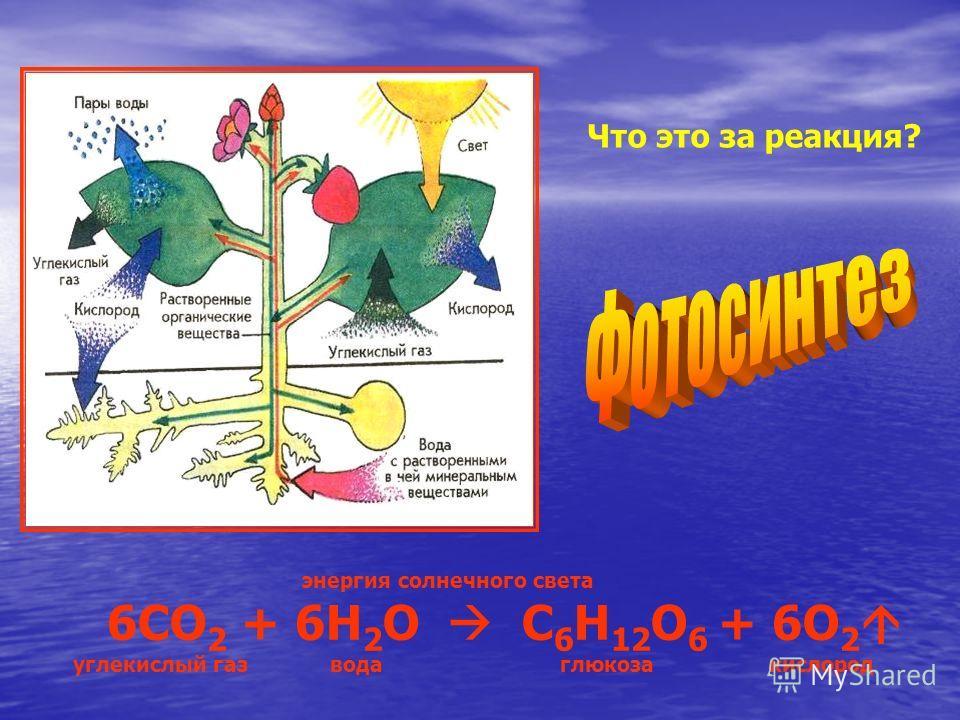 Что это за реакция? энергия солнечного света 6СО 2 + 6Н 2 О С 6 Н 12 О 6 + 6О 2 углекислый газ вода глюкоза кислород