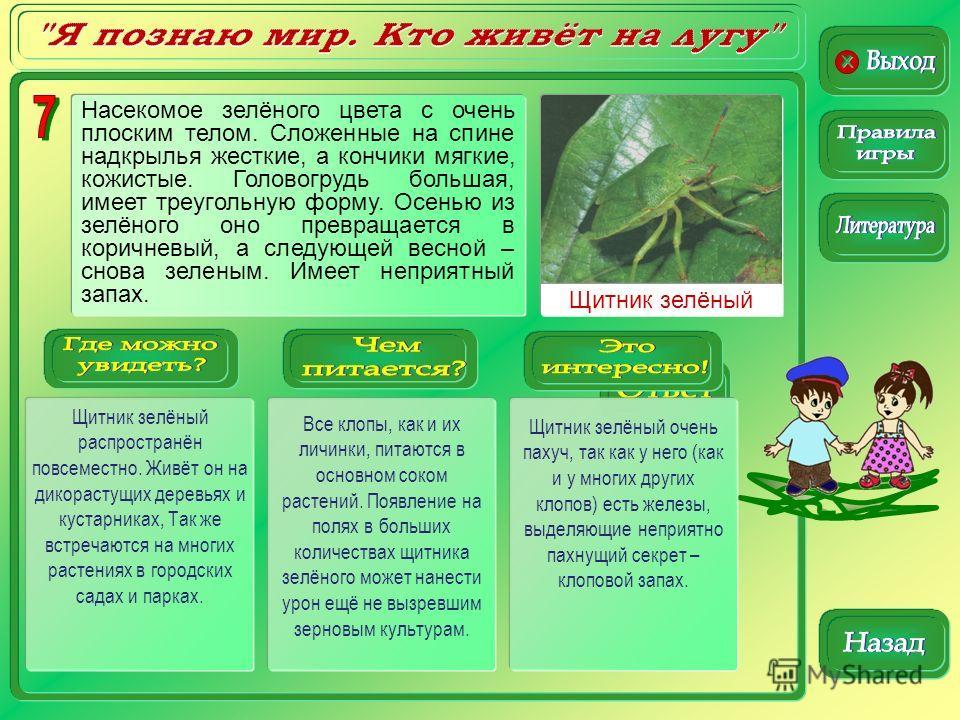 Щитник зелёный Щитник зелёный распространён повсеместно. Живёт он на дикорастущих деревьях и кустарниках, Так же встречаются на многих растениях в городских садах и парках. Все клопы, как и их личинки, питаются в основном соком растений. Появление на