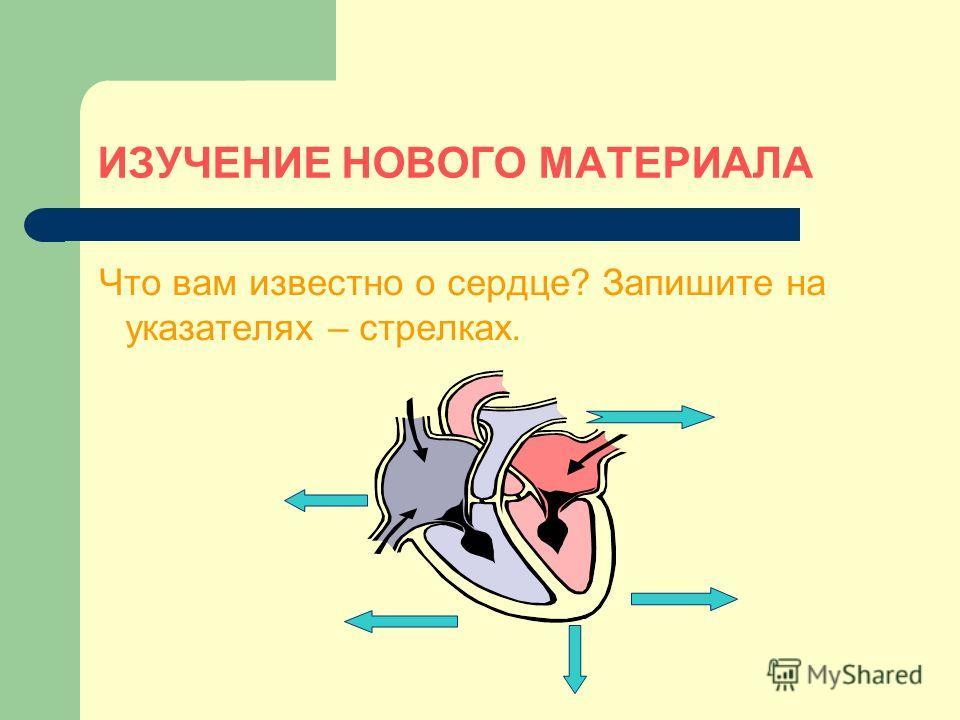 ИЗУЧЕНИЕ НОВОГО МАТЕРИАЛА Что вам известно о сердце? Запишите на указателях – стрелках.