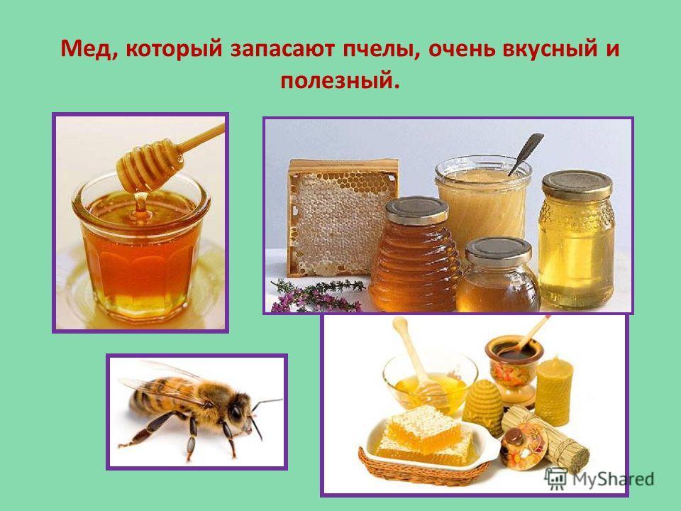 Мед, который запасают пчелы, очень вкусный и полезный.