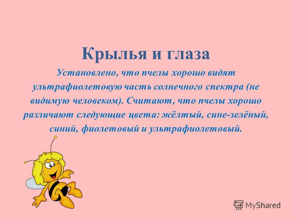 Крылья и глаза Установлено, что пчелы хорошо видят ультрафиолетовую часть солнечного спектра (не видимую человеком). Считают, что пчелы хорошо различают следующие цвета: жёлтый, сине-зелёный, синий, фиолетовый и ультрафиолетовый.