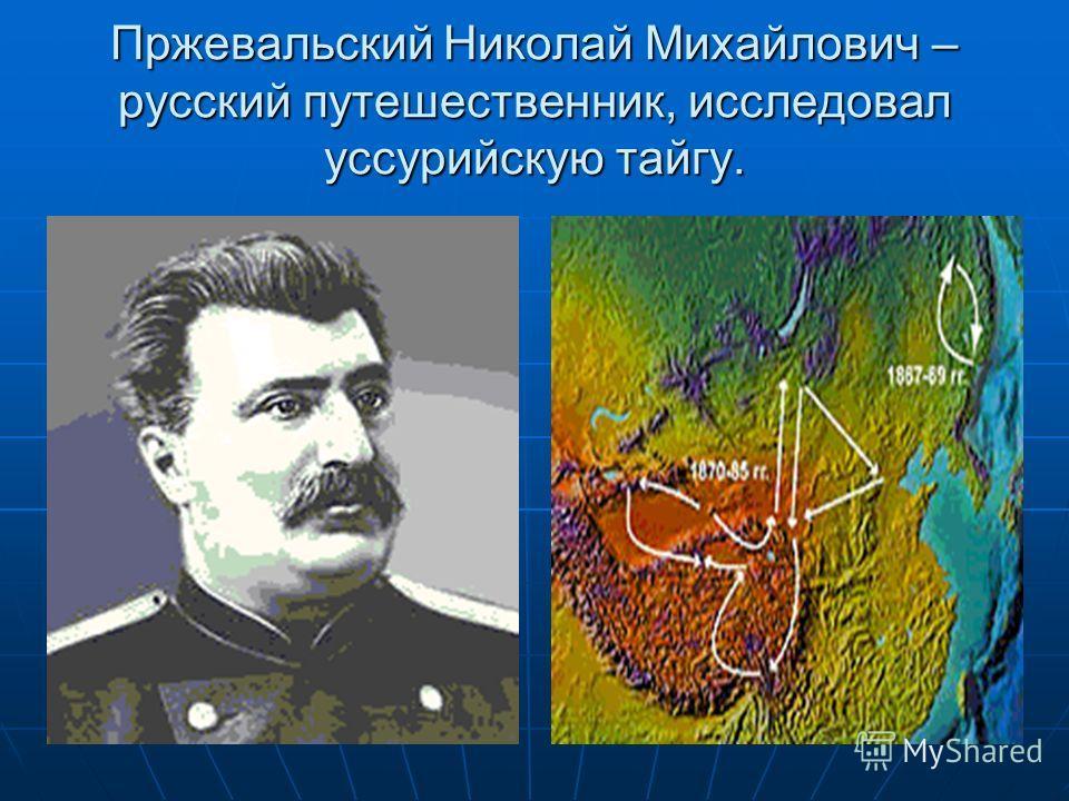 Пржевальский Николай Михайлович – русский путешественник, исследовал уссурийскую тайгу.