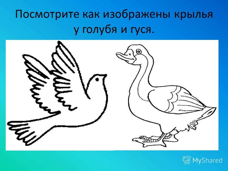 Посмотрите как изображены крылья у голубя и гуся.