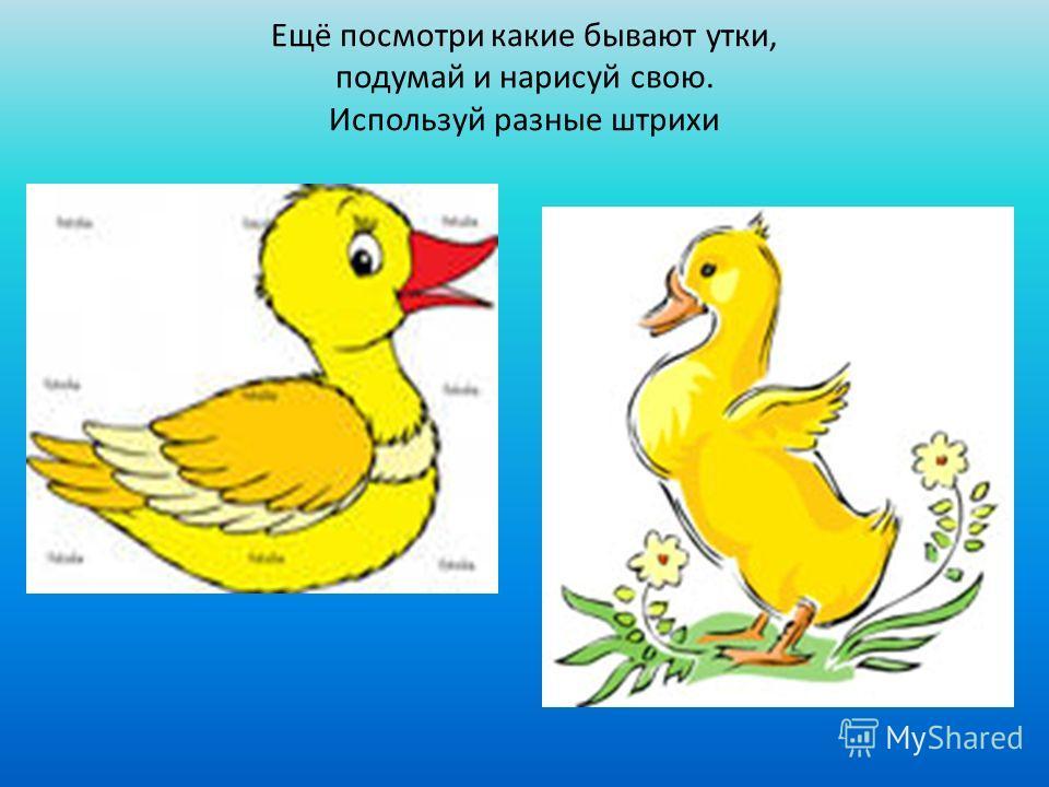 Ещё посмотри какие бывают утки, подумай и нарисуй свою. Используй разные штрихи