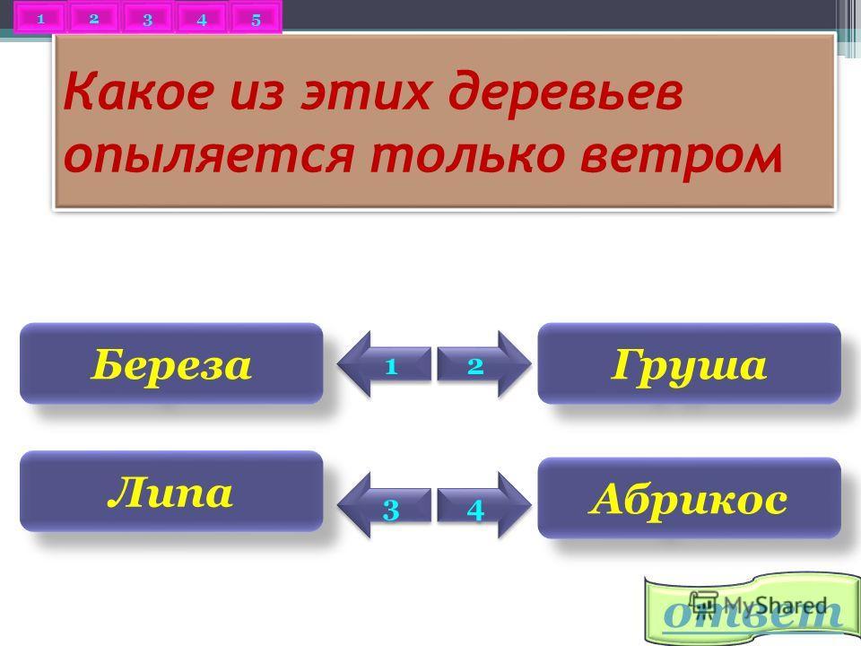 2 2 Клавикорд