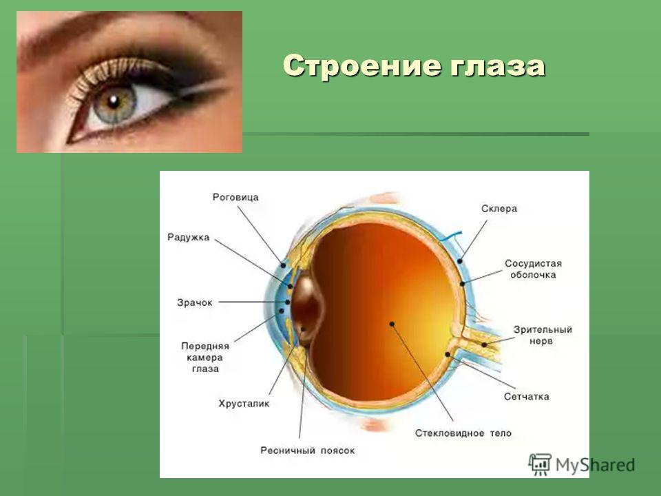 Строение глаза Строение глаза