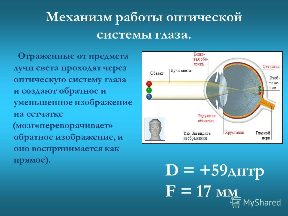 Хрусталик. Хрусталик (двояковыпуклая линза), способен менять кривизну поверхности, что позволяет видеть предметы, находящиеся на разном расстоянии. Данное явление называется аккомодацией.