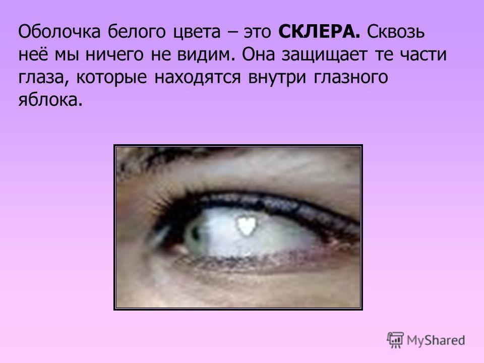 Оболочка белого цвета – это СКЛЕРА. Сквозь неё мы ничего не видим. Она защищает те части глаза, которые находятся внутри глазного яблока.
