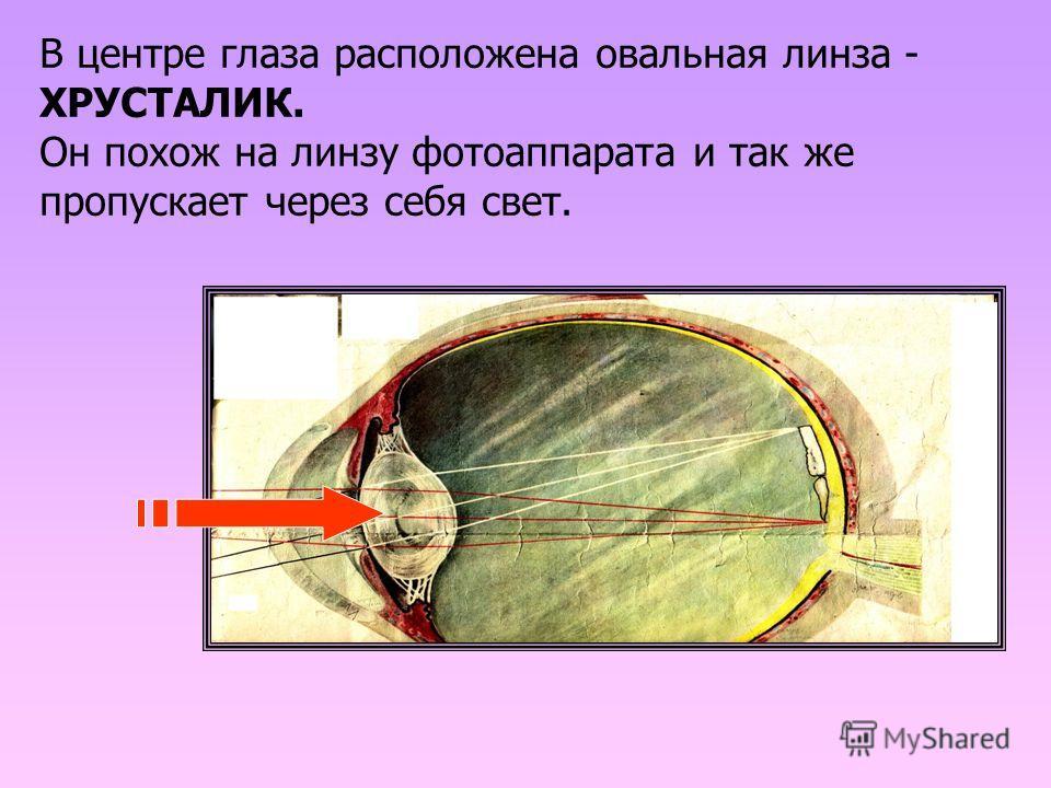 В центре глаза расположена овальная линза - ХРУСТАЛИК. Он похож на линзу фотоаппарата и так же пропускает через себя свет.