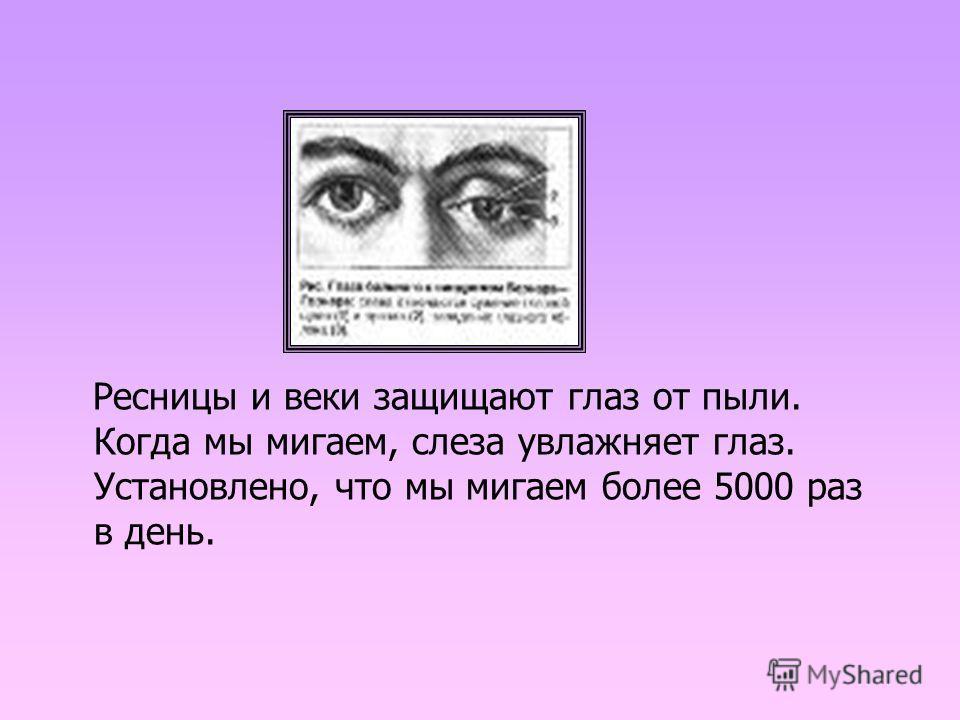 Ресницы и веки защищают глаз от пыли. Когда мы мигаем, слеза увлажняет глаз. Установлено, что мы мигаем более 5000 раз в день.