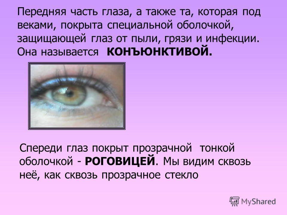 Передняя часть глаза, а также та, которая под веками, покрыта специальной оболочкой, защищающей глаз от пыли, грязи и инфекции. Она называется КОНЪЮНКТИВОЙ. Спереди глаз покрыт прозрачной тонкой оболочкой - РОГОВИЦЕЙ. Мы видим сквозь неё, как сквозь