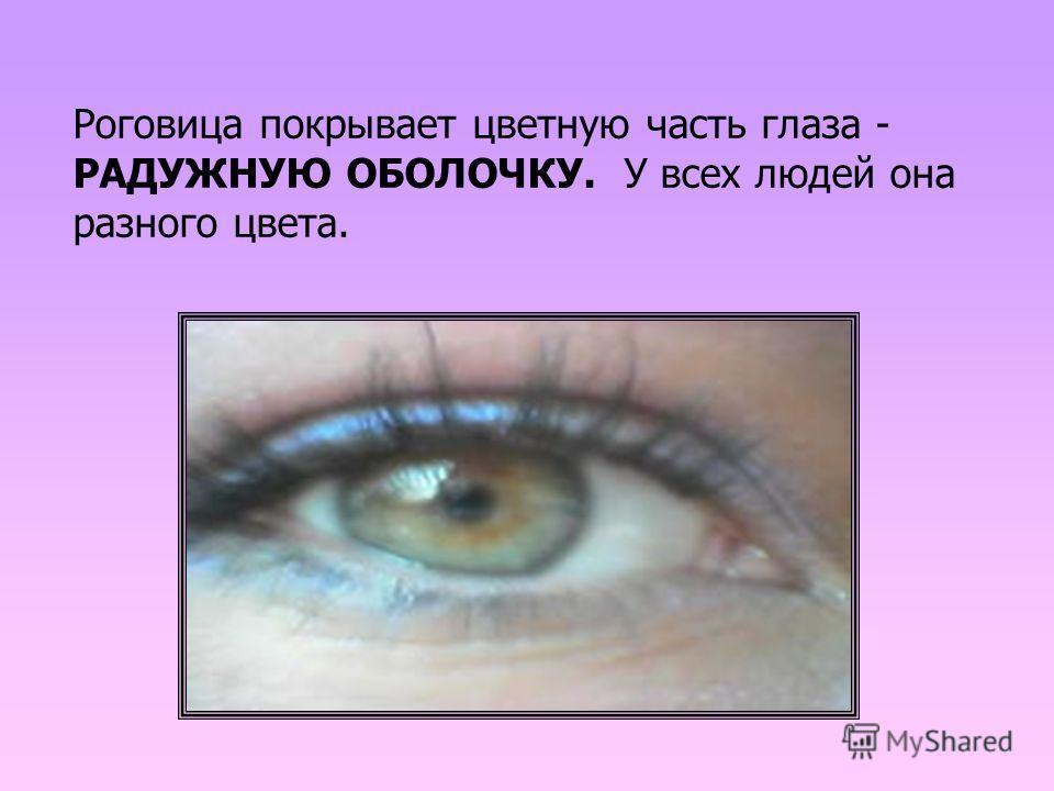 Роговица покрывает цветную часть глаза - РАДУЖНУЮ ОБОЛОЧКУ. У всех людей она разного цвета.