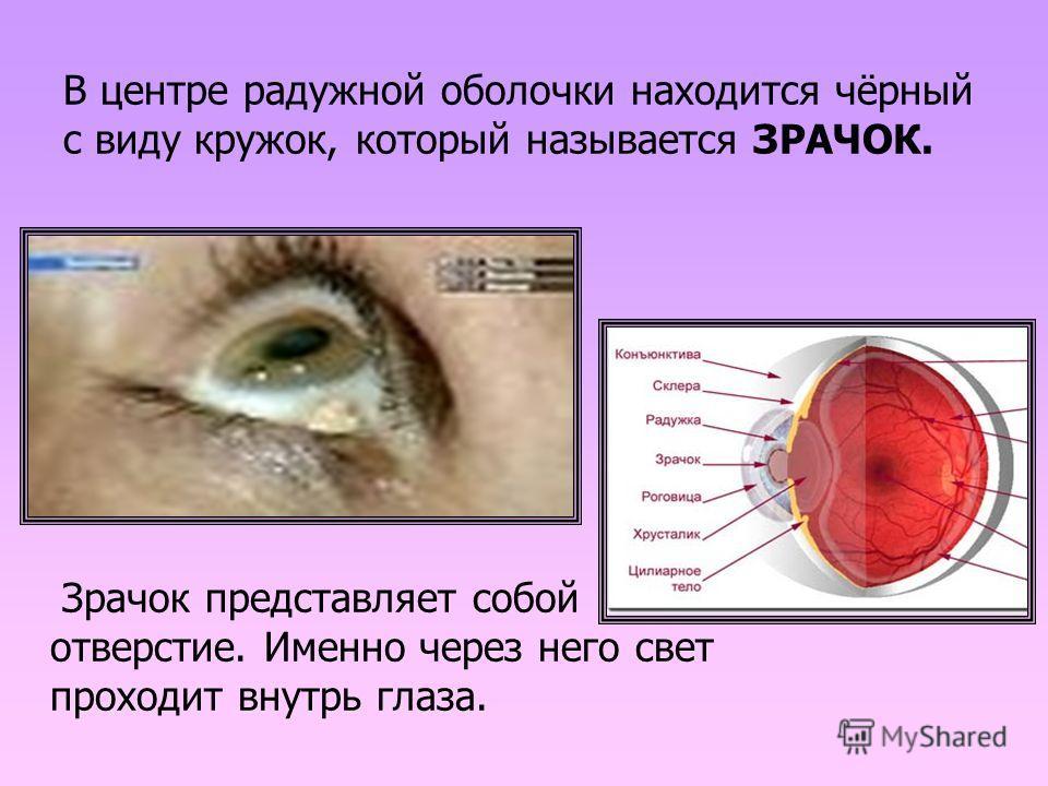 В центре радужной оболочки находится чёрный с виду кружок, который называется ЗРАЧОК. Зрачок представляет собой отверстие. Именно через него свет проходит внутрь глаза.